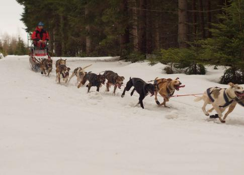 Mushing in the Krkonose
